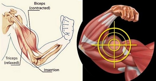 how to grow outside of biceps