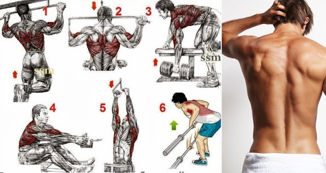 Best Exercises To Build A Big Back