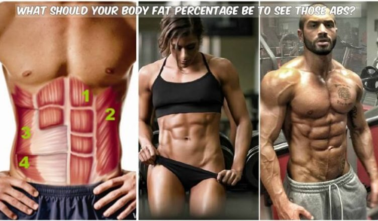 Body Fat Percentage See Abs on abdominals exercises