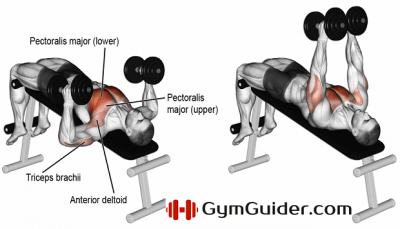 Chest Gym Guider