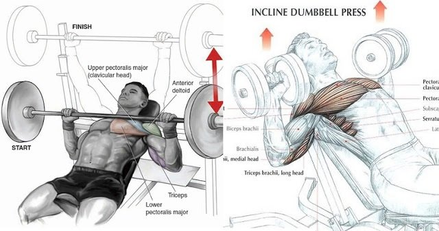 Incline Bench Press: Dumbbells Vs Barbell - GymGuider.com