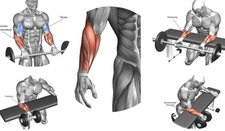 The Best Exercises For Massive Forearm - GymGuider.com