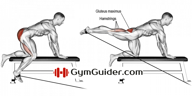 Cable Extension Exercise : Kneeling cable hip extension exercise guide gymguider
