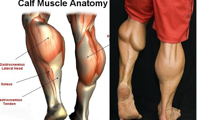 4 Best Calf Exercises To Get Diamond Shaped Calves Gymguider
