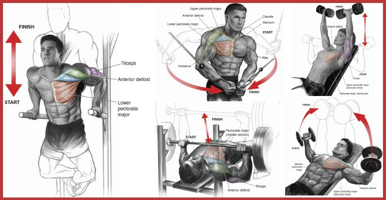 Perfect 7 Techniques To Build The Upper Chest Gymguider Com
