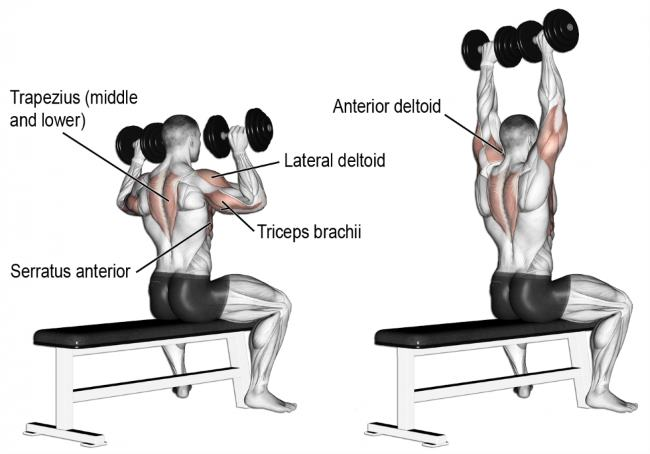 Ways To Shape And Form Your Shoulders Gym Guider