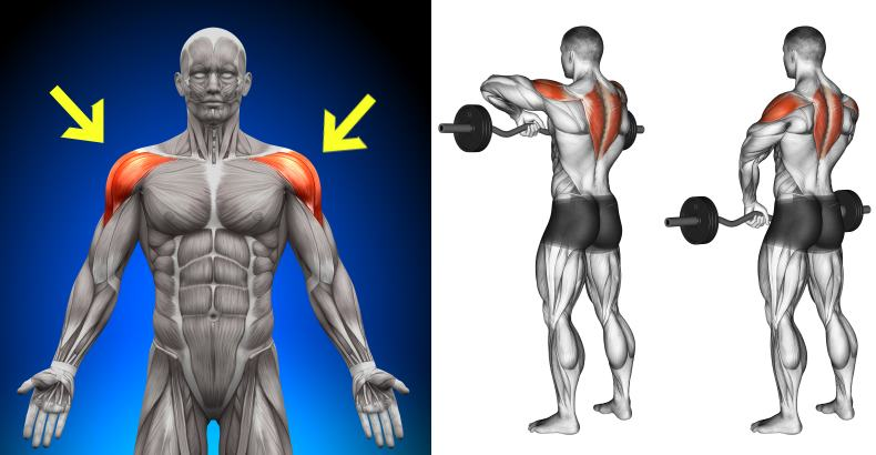 Ways To Shape And Form Your Shoulders Gymguider