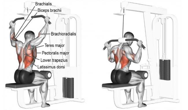 Lat Pull Down Exercises For A Defined Back Gym Guider