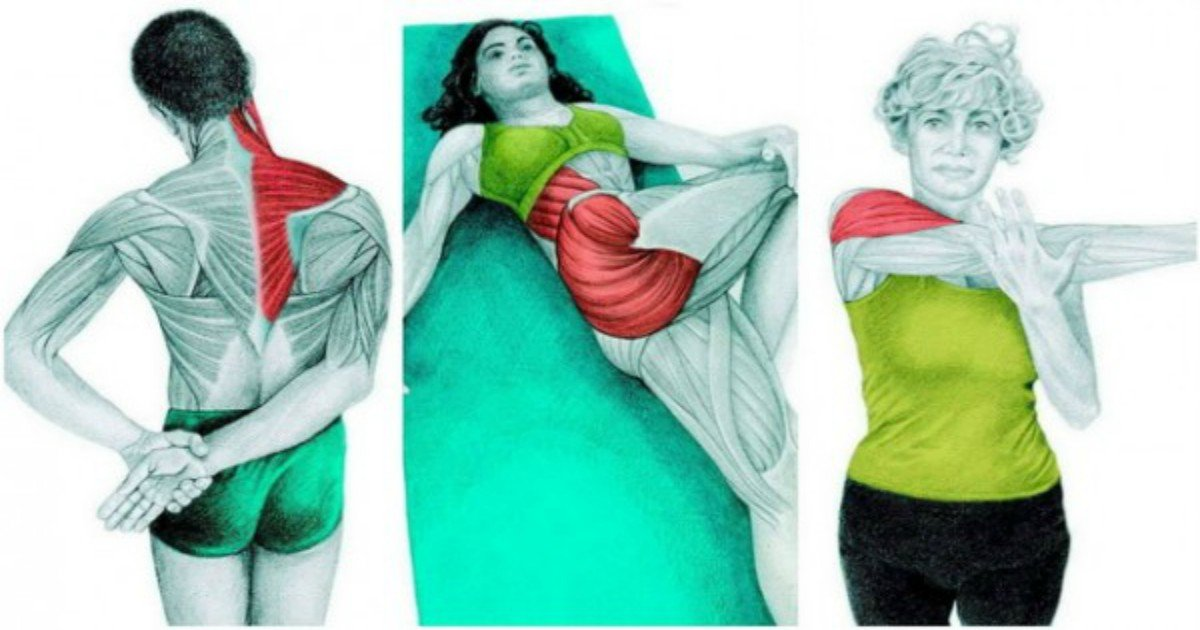 Full Body Stretching Exercises 34 Best Stretching