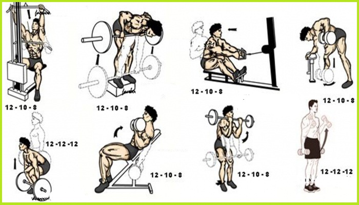 Sculpted Back And Biceps Workout - Gym Guider
