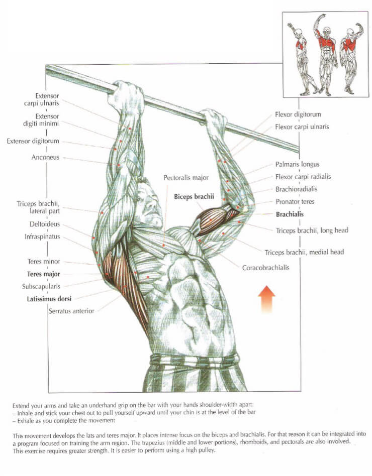 Mastering The Chin Up: Guide, Form, Flaws, Set Up & Execution ...