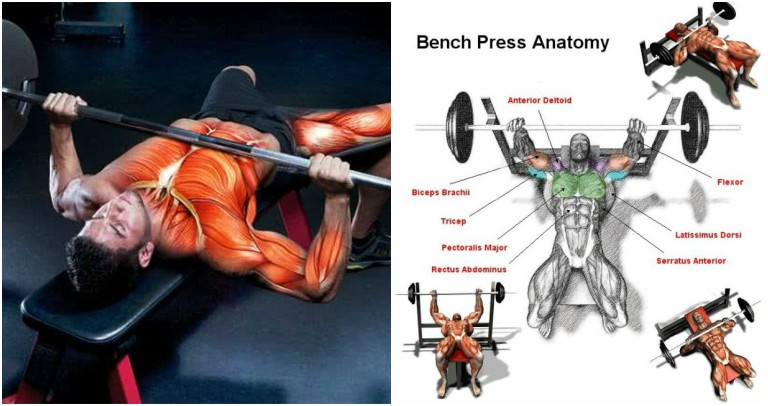 Advanced Bench Press Program For Strength And Size