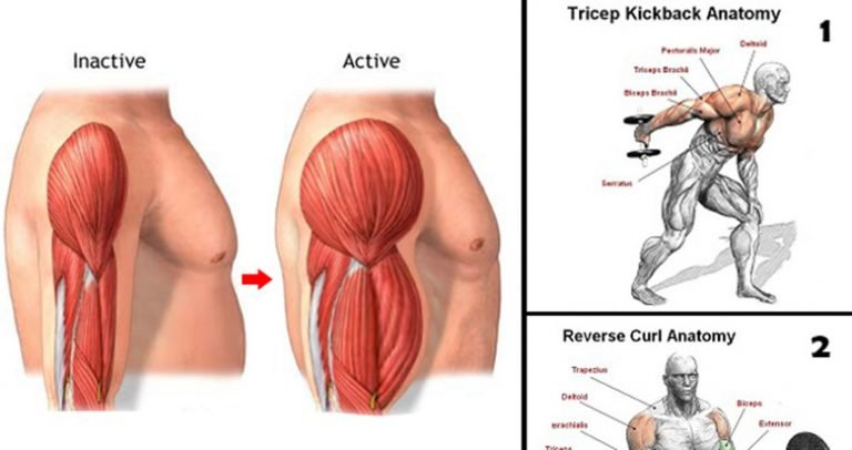 Gain Biceps And Triceps Mass With These 12 Exercises And Workout