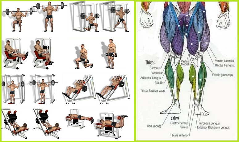 Gain Leg Mass With This 4 Week And Daily Multiple Exercise