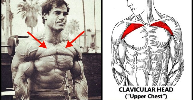 Upper Chest 8 Tips And Guide For Building A Big Upper Chest