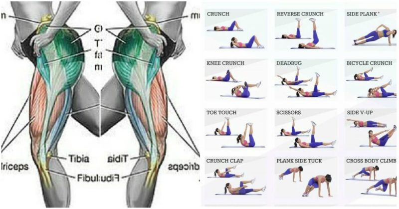 Muscle Building Exercises For Glutes