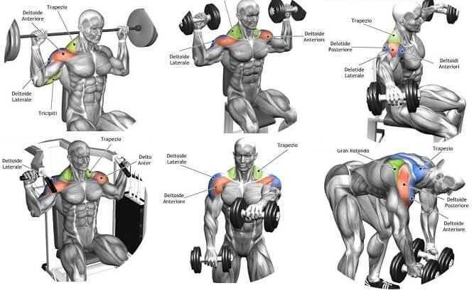 gym guider