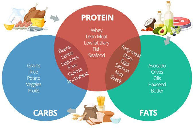 Protein Carb Fat Ratio For Muscle Building Calculator