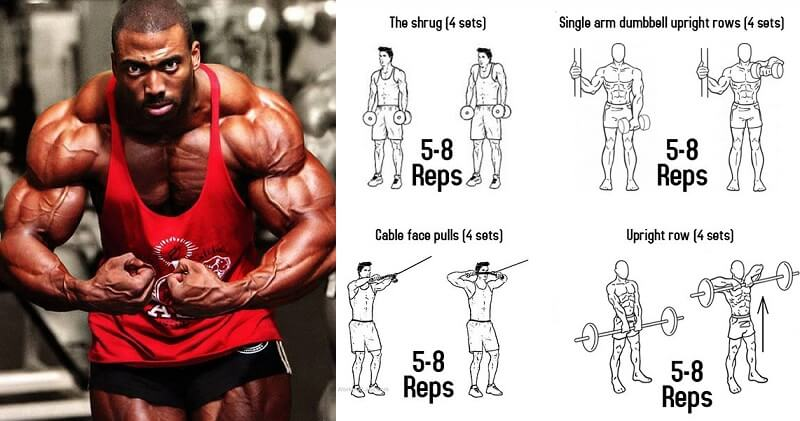 Muscle Building Programs That Work