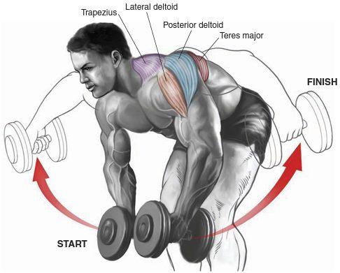 the 5 most effective shoulder dumbbell exercises for mass