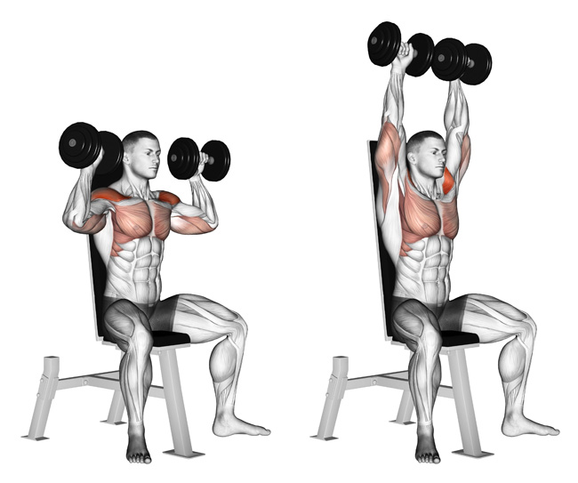 The 4 Best Exercises To Create 3d Shoulders True Bodybuilding