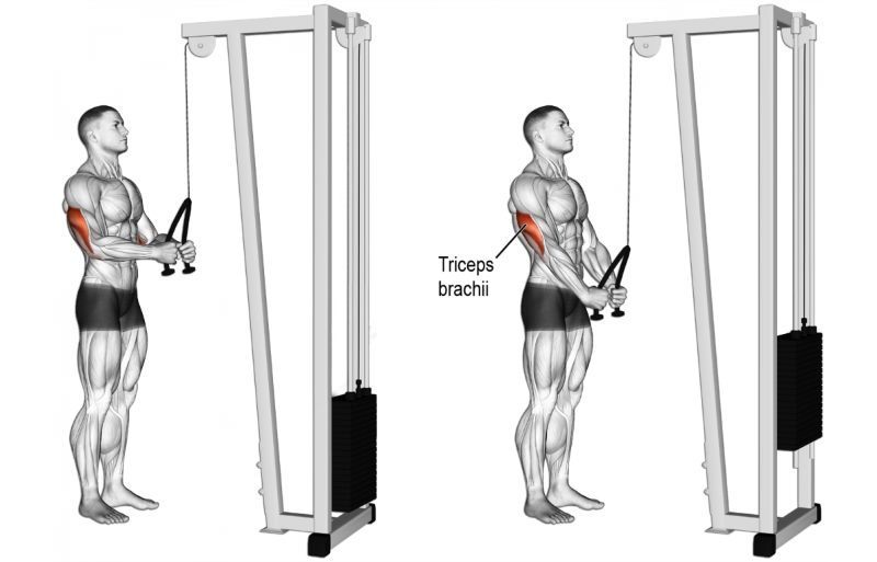 Push Pull Cables >> The 11 Best Bicep and Tricep Exercises for Mass - GymGuider.com
