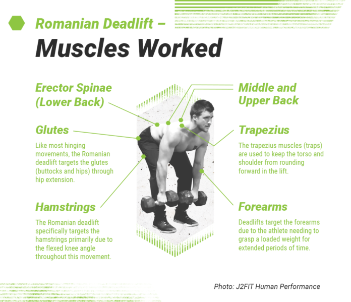 Romanian Deadlift Used For Extreme Muscle Growth And