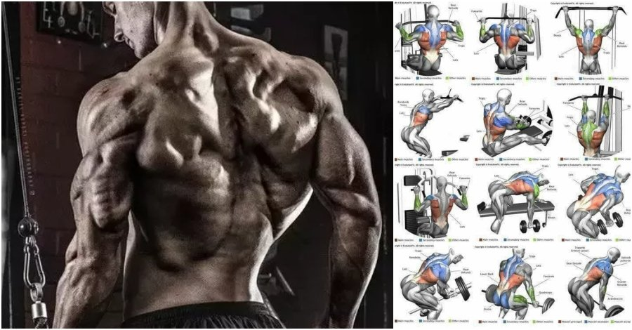 Top 10 The Best Muscle Building Back Exercises Gymguider Com