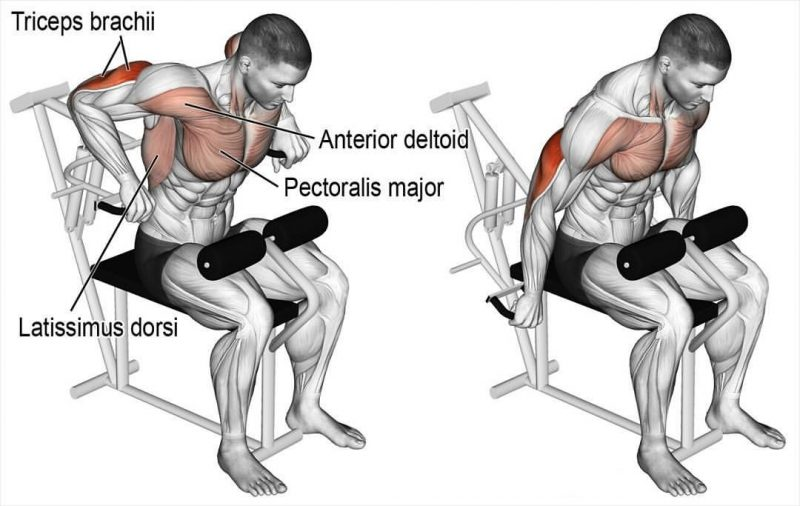 Surprising 6 Best Triceps Workouts Unleash New Arms Growth Pabps2019 Chair Design Images Pabps2019Com