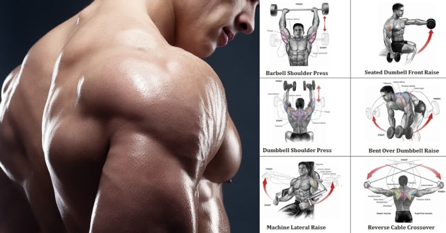 Define Your Delts With The Best Delt Exercises Devised Gymguider Com